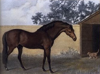 The Godolphin Arabian - Stubbs, after Morier