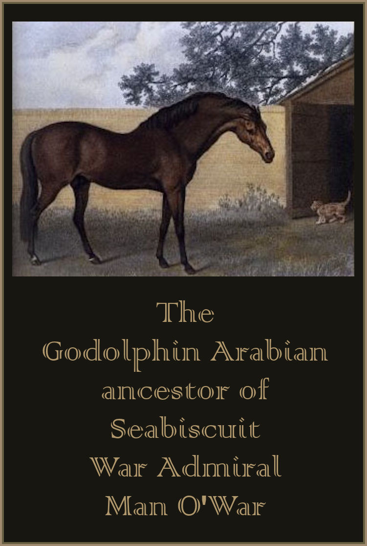 The Godolphin Arabian - What We Can Learn From the Godolphin Arabian's Life?